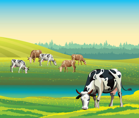 Rural summer landscape with cows and green meadow. Vector nature illustration.