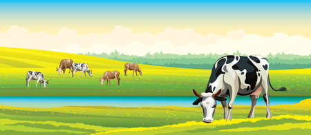 vaca caricatura: Rebaño de vacas en el campo verde en un cielo nublado. Vector paisaje rural.