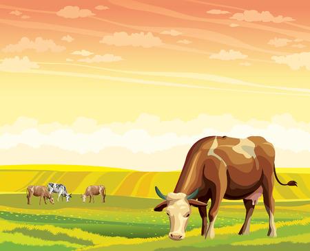 vaca caricatura: Manada de vacas en campo verde en un cielo del atardecer. Vector verano paisaje rural. Vectores
