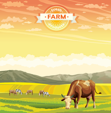 herd: Fresh farm products. Herd of cows in green field. Vector rural nature landscape.