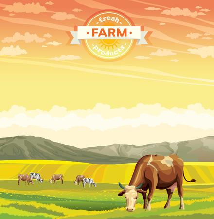 vaca: Productos agrícolas frescos. Rebaño de vacas en el campo verde. Vector naturaleza paisaje rural.