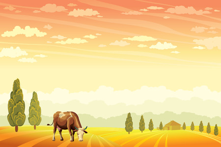 is cloudy: Domestic cow grazing on the field wih the sunset cloudy sky background. Vector of rural summer landscape.