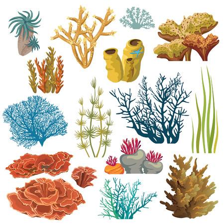 corales marinos: Conjunto de plantas y criaturas submarinas de dibujos animados. Vector aislados corales y algas.