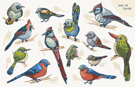 aves caricatura: Colección de pájaros de color de dibujos animados sobre un fondo blanco.