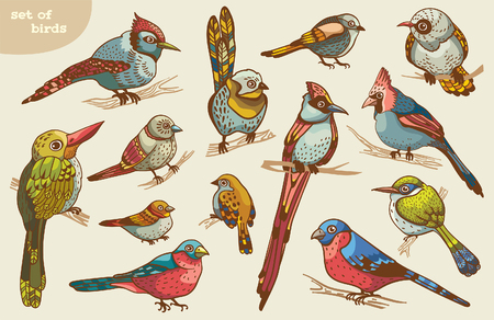 brawn: Set of colored cartoon birds. Vector of animal illustration.
