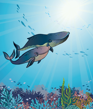 female animal: Vector underwater illustration - couple of cartoon whales and coral reef on a blue sea background.
