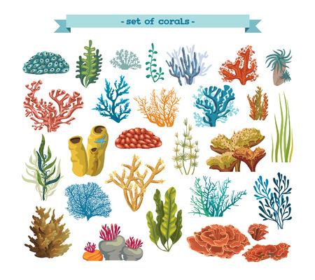 corales marinos: Conjunto de corales y algas de colores aislados sobre un fondo blanco. Vector flora y fauna submarina.