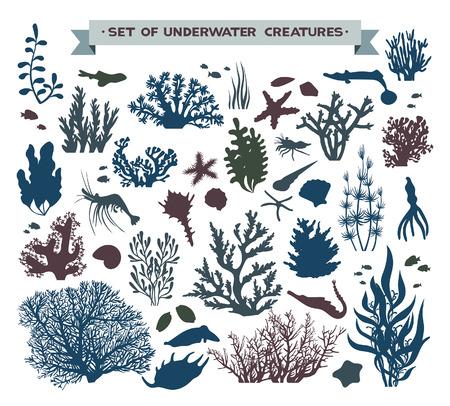 zestaw podwodnych stworzeń morskich - rafa koralowa, ryby, muszle i rozgwiazdy.
