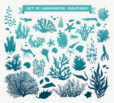zestaw zwierząt morskich - koralowców, ryb, krewetek, muszle i rozgwiazdy. Podwodnych stworzeń morskich na białym tle.