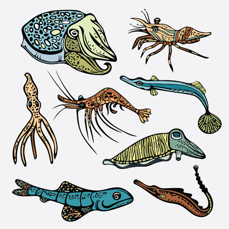 cuttlefish: Collection of underwater creatures - octopus, shrimp, squid, cuttlefish, fish. set of sea animals on a white background.