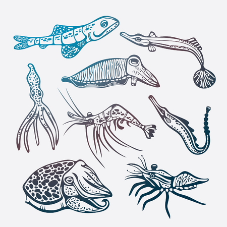 creatures: set of underwater creatures on a white background. Collection of sea animal - octopus, shrimp, squid, cuttlefish, fish.