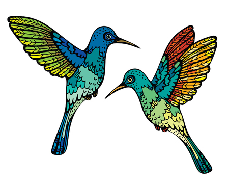 Two graphic colorful hummingbirds on a white background. Vector illustration with tropical bird.