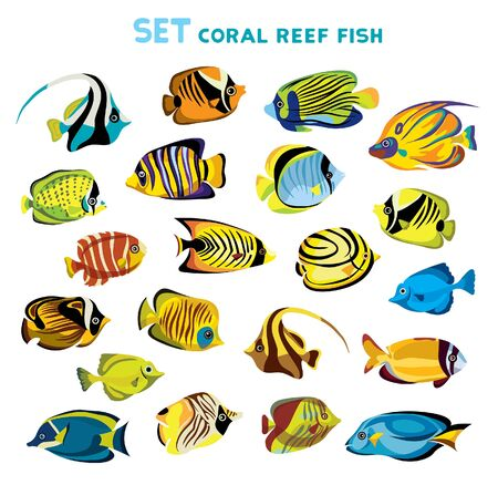 Set of coral reef fishes on a white