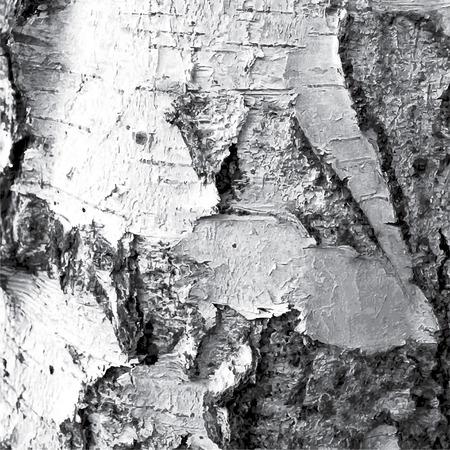 birch bark: Black white illustration bark of a birch tree Illustration