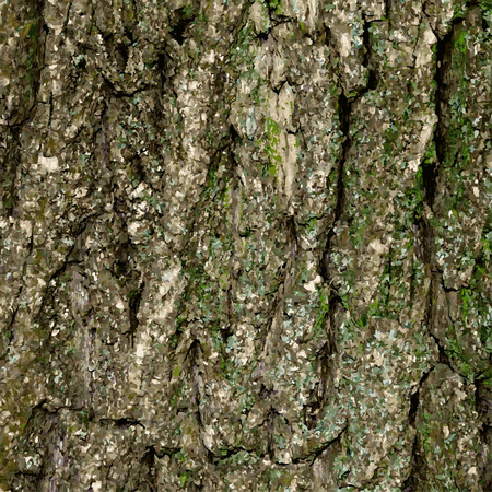 tree bark: Abstract colored illustration of the tree bark Illustration