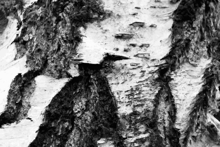 birch bark: Abstract illustration bark of a birch tree