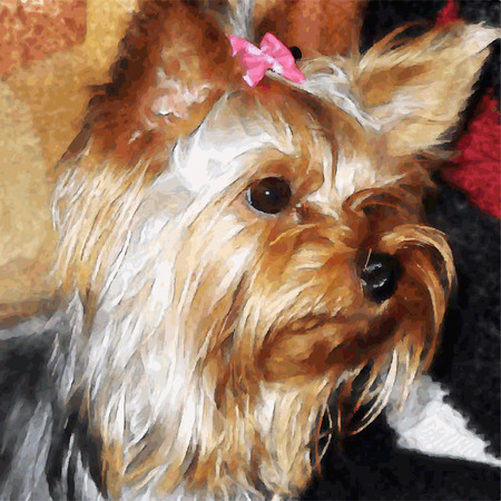 hairy girl: Illustration of dog breed yorkshire terrier with bow Illustration