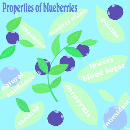 blueberries: Flat colored illustration properties of blueberries with text
