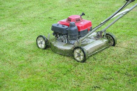 frontyard: Mowing the Grass