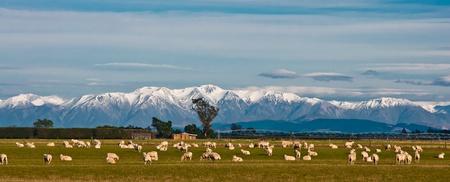 Berglandschap met grazende schapen, Nieuw-Zeeland Stockfoto