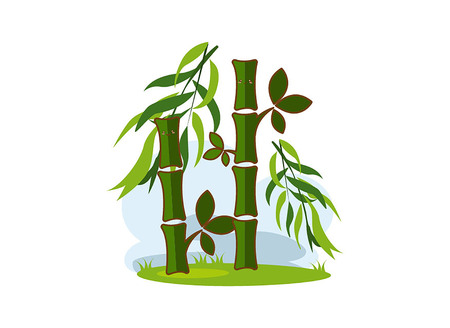 Bamboo on a white background