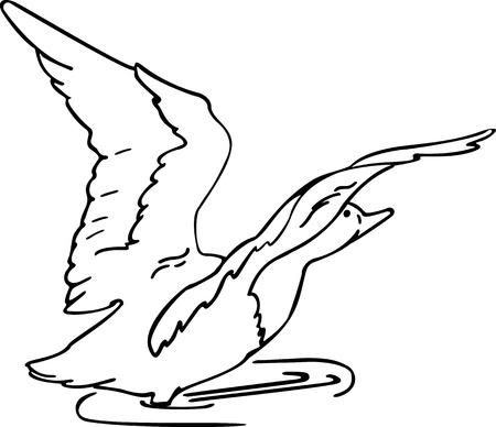 mallard: la ilustración en el pato al ras Vectores