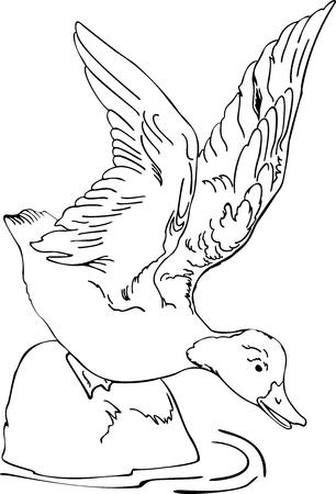 illustration on the floating duck Illustration