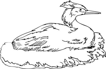 webbed: illustration of the duck in the nest