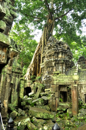 Giant banyan tree covering the stones of the fascinating temple of Ta Prohm in Angkor Wat, Siem Reap, Cambodia