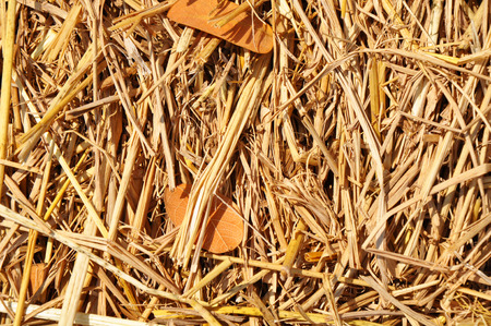 haystack: Hay background as a front view of a bale of hay as an agriculture farm and farming symbol of harvest time with dried grass straw as a bundled tied haystack. Stock Photo