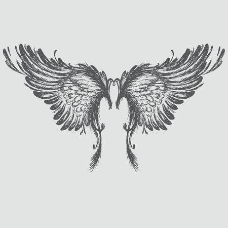 fairy wings: Wings,hand drawing, vector illustration.