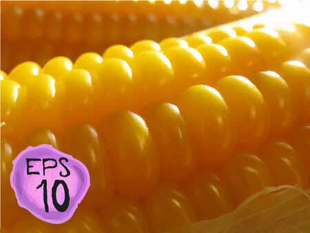 Corn vector background