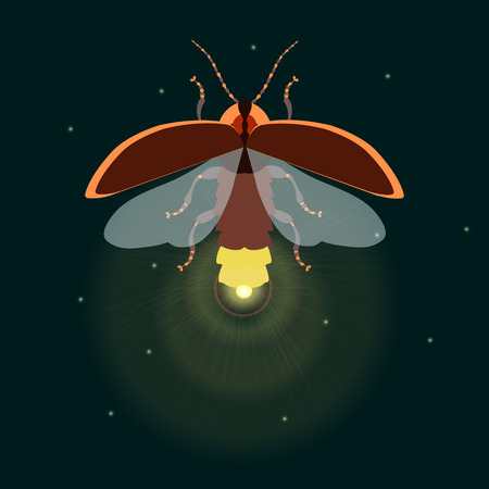 firefly: Firefly bug design template. Firefly. Flying bug glowworm. Lightning bug with its wings open. Isolated illustration.