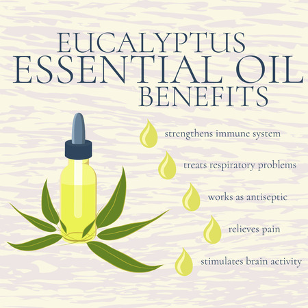 eucalyptus: Benefits of eucalyptus essential oil. infographics. Reasons to use eucalyptus essential oil. A bottle of eucalyptus oil. Isolated vector illustration.