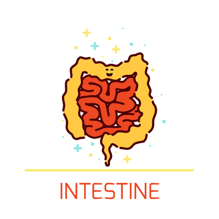internal organ: Vector illustration of large and small intestine. Intestine icon made in cartoon style. Cute intestine cartoon character. Human body organs anatomy icon. Human internal organ symbol. Medical concept.