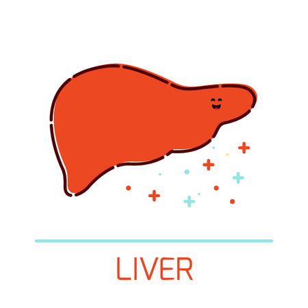 fatty liver: Cute healthy liver icon made in cartoon style. Liver cartoon character. Human body organs anatomy icon. Medical human internal organ symbol. Medical concept. Vector illustration.
