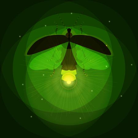 glowworm: Firefly bug Illustration
