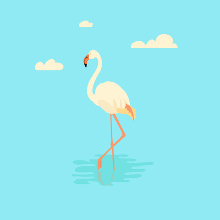 water bird: Vector illustration of a white flamingo standing in water on one leg. Exotic bird made in flat style. Flat flamingo bird symbol. Flamingo icon. Flamingo vector silhouette isolated on blue background.
