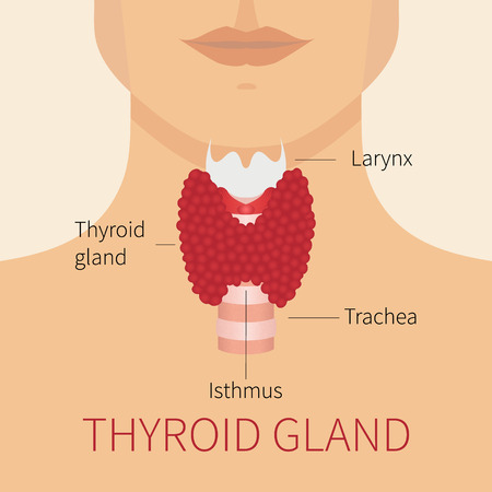 Thyroid gland vector illustration. Thyroid gland and trachea scheme shown on a silhouette of a man. Thyroid diagram sign. Human body organs thyroid anatomy icon. Medical concept. Anatomy of people. Ilustracja