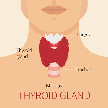 parathyroid: Thyroid gland vector illustration. Thyroid gland and trachea scheme shown on a silhouette of a man. Thyroid diagram sign. Human body organs thyroid anatomy icon. Medical concept. Anatomy of people. Illustration