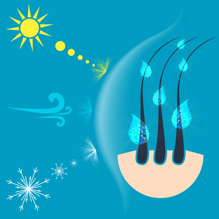 baldness: Vector illustration of hair follicles protected by a shield from the sun, wind and snow. Hair protection concept.