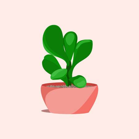Jade money succulent plant in a flower pot on pink background. Home interior floral design elements. Green plants, flowers and nature concept. Tropical exotic botany collection. Vector illustration. Illustration