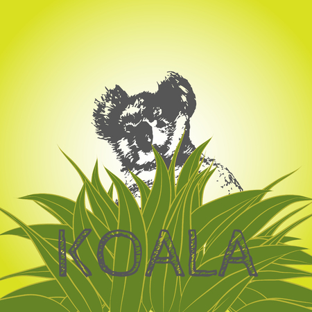aussie: Vector illustration of a koala bear in eucalyptus leaves. Koala. Eucalyptus tree. Illustration