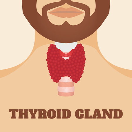 trachea: Thyroid gland and trachea shown on a silhouette of a man with a beard. Human body organs thyroid anatomy icon. Medical concept. Anatomy of people. illustration.