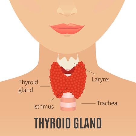Thyroid gland on woman silhouette