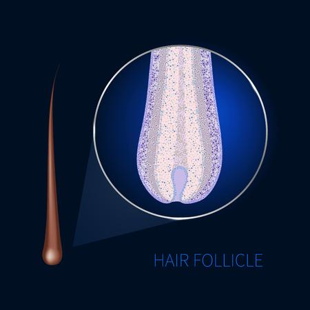 Hair follicle closeup Illustration