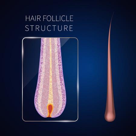 Hair follicle closeup Иллюстрация