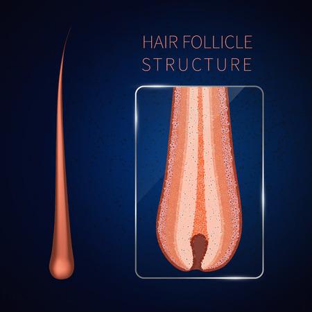 Hair follicle closeup Vectores