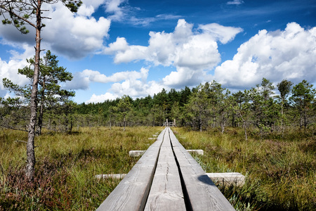 Swamp of Kemeri National Park in Latvia