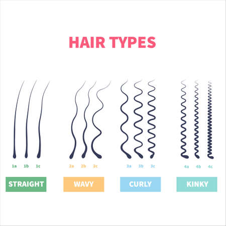 Straight, wavy, curly, kinky hair types classification system set. Detailed human hair growth style chart. Health care and beauty concept. Vector illustration.